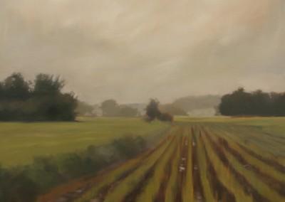 Fields After Rain